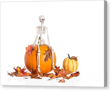 Bones Canvas Print - Skeleton Sitting On Pumpkin by Amanda Elwell