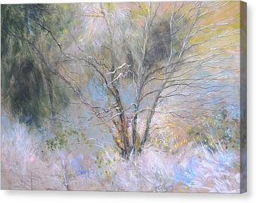 Sketch Of Halation Effect Through Trees Canvas Print
