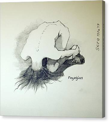 Canvas Print featuring the painting Sketch Of Sera.10.03 by Ray Agius