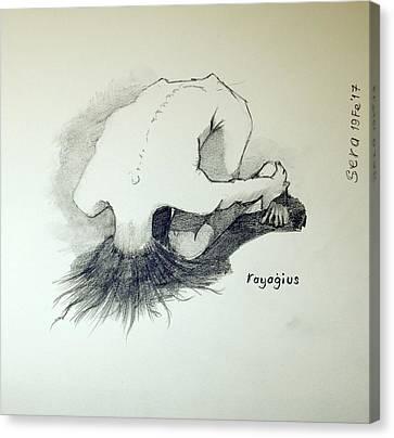 Sketch Of Sera.10.03 Canvas Print by Ray Agius