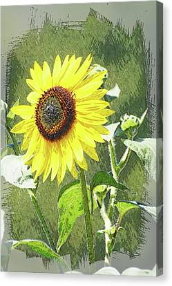 Sketchy Sunflower 1 Canvas Print