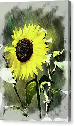 Sketchy Sunflower 2 Canvas Print