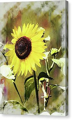 Sketchy Sunflower 3 Canvas Print
