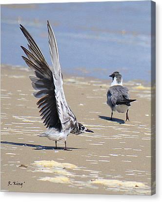 Skiddish Black Tern Canvas Print by Roena King
