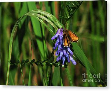 Canvas Print featuring the photograph Skipper Butterfly by Deborah Johnson