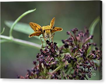 Canvas Print featuring the photograph Skipper II by Douglas Stucky