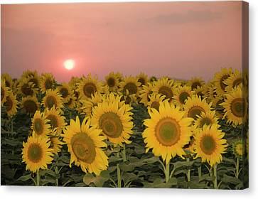 Skn 2179 Sunflower Landscape Canvas Print