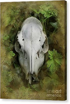 Skull And Leaves Canvas Print by The Rambler