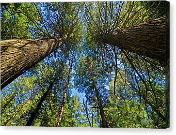 Canvas Print featuring the photograph Skyward by Gary Lengyel