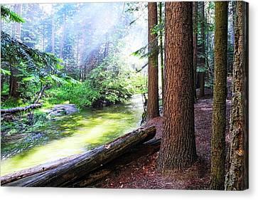 Slanting Sunlight On River Canvas Print