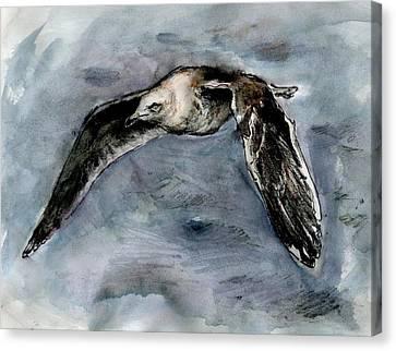 Slaty-backed Gull Canvas Print