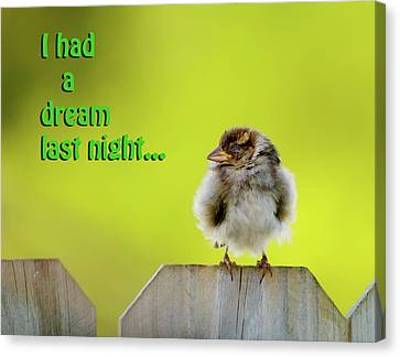 Sleeping Baby Sparrow Canvas Print by Betty LaRue