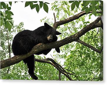 Sleeping Bear Canvas Print by Whispering Feather Gallery