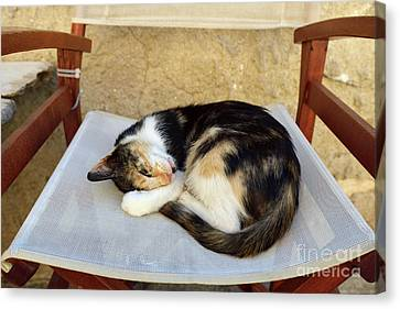 Sleeping Cat Canvas Print by George Atsametakis