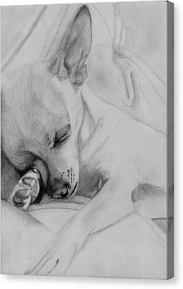 Sleeping Chihuahua Canvas Print