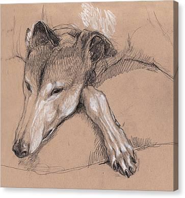 Greyhound Canvas Print - Sleeping Greyhound by Tracie Thompson