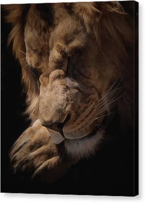 Sleeping Lion Digital Art Canvas Print