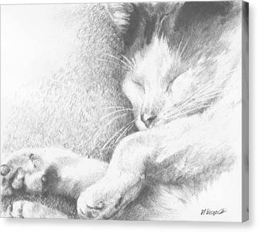 Canvas Print featuring the drawing Sleeping Sadie by Meagan  Visser