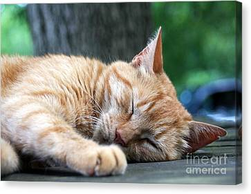 Sleeping Salem Canvas Print by Wendy Coulson