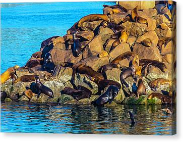 Sleeping Sea Lions Canvas Print by Garry Gay