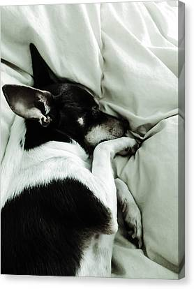 Sleeping Squib Canvas Print by Heather Joyce Morrill