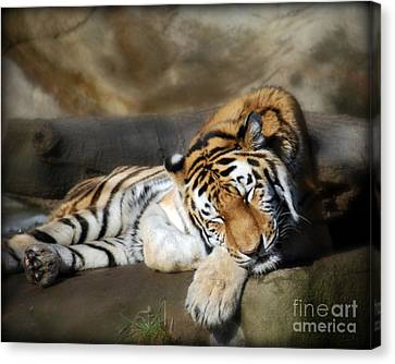Sleeping Tiger  Canvas Print by Lila Fisher-Wenzel