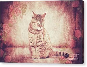 Feline Canvas Print - Sleepy Cat by KaFra Art