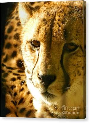 Sleepy Cheetah Cub Canvas Print by Emmy Marie Vickers