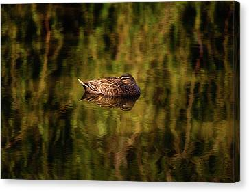 Canvas Print featuring the photograph Sleepy Duck, Yanchep National Park by Dave Catley
