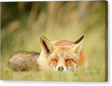 Sleepy Fox Is Sleepy IIi Canvas Print