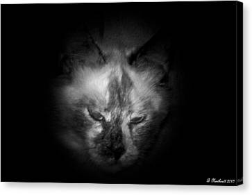 Canvas Print featuring the photograph Sleepy Head by Betty Northcutt