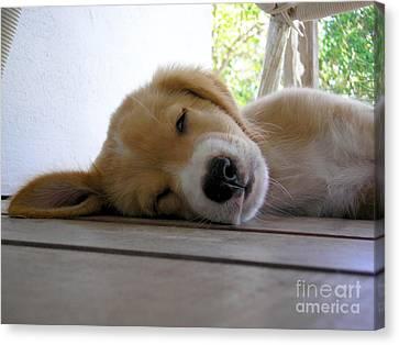 Sleepy Jojo Canvas Print by Barbara Marcus