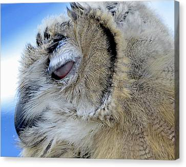 Sleepy Owl Canvas Print by Bob Slitzan