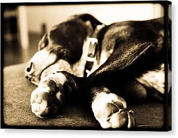 Canvas Print - Sleepy Puppy by Magdalena Green