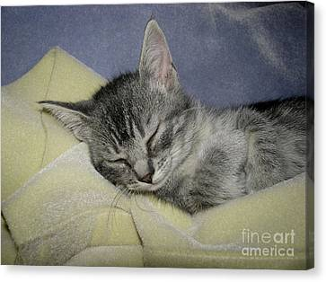 Sleepy Time Canvas Print