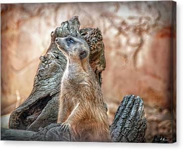 Canvas Print featuring the photograph Slender-tailed Meerkat by Hanny Heim