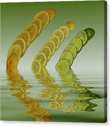 Slices  Grapefruit Lemon Lime Citrus Fruit Canvas Print by David French