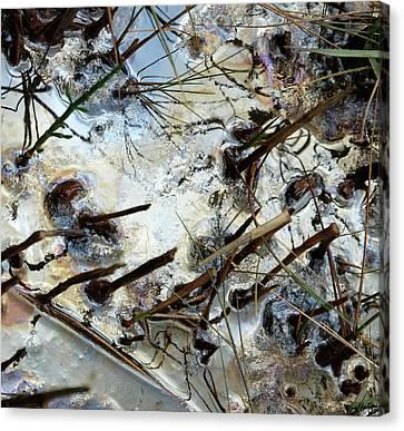 Slick  Canvas Print