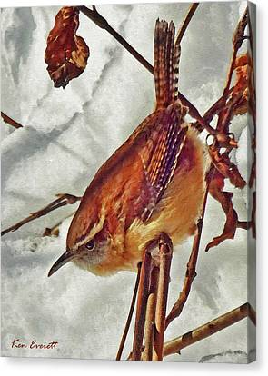 Slim Pickens, Carolina Wren Canvas Print by Ken Everett