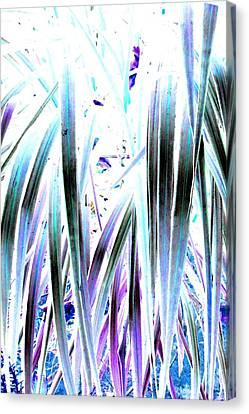 Slink Canvas Print by Cyryn Fyrcyd