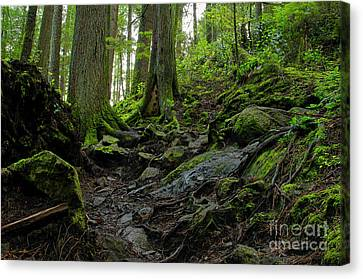 Canvas Print featuring the photograph Slippery When Wet by Sharon Talson