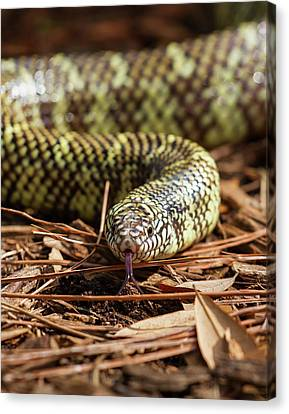 Canvas Print featuring the photograph Slither Snake by Arthur Dodd