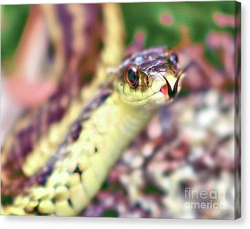 Canvas Print featuring the photograph Slithering Snake With Forked Tongue by Debbie Stahre