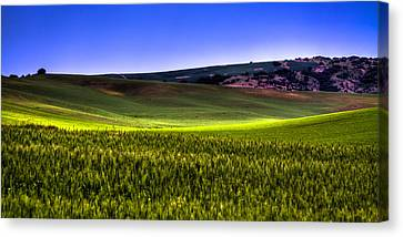 Sliver Of Sunlight On The Palouse Hills Canvas Print by David Patterson