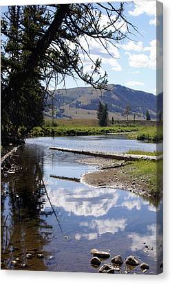 Slough Creek 1 Canvas Print by Marty Koch