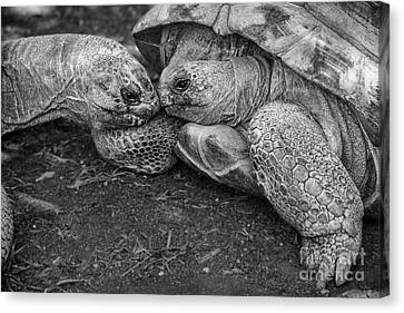 Slow Kiss Canvas Print by Jamie Pham