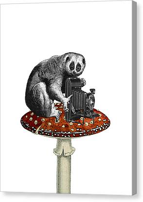 Slow Loris With Antique Camera Canvas Print by Madame Memento