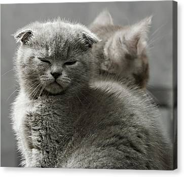 Slumbering Cat Canvas Print