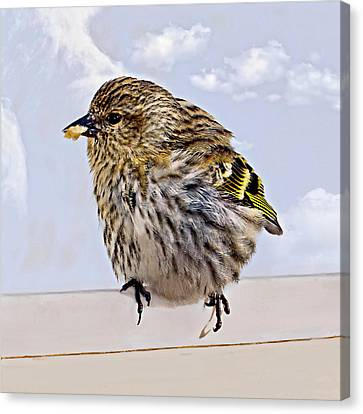 Small Bird Eating Seed Canvas Print by Susan Leggett
