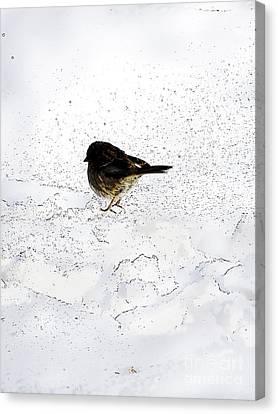 Small Bird On Snow Canvas Print